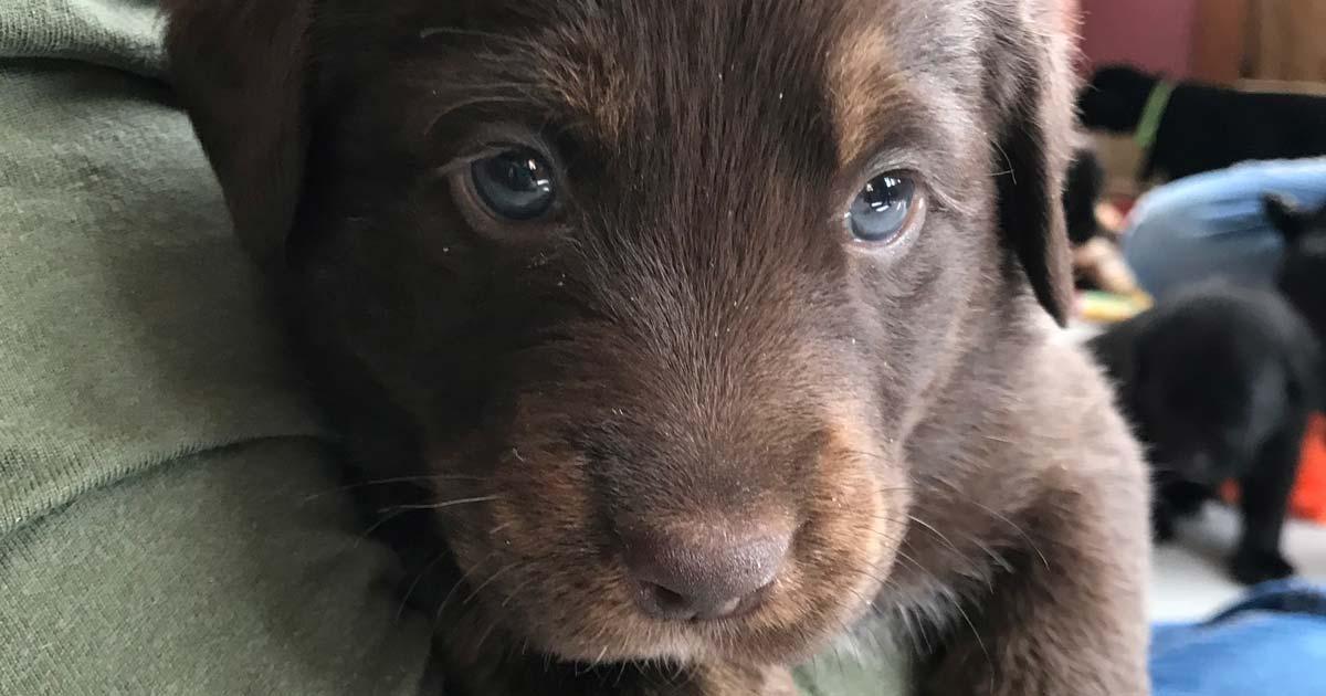 Found Onfocus Episode 1 Marshfield Area Pet Shelter Onfocus